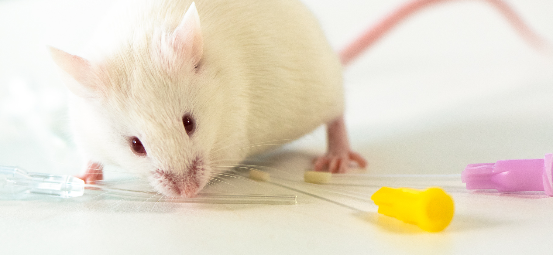 Mouse with flexible feeding tubes