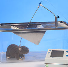 Rat infusion system