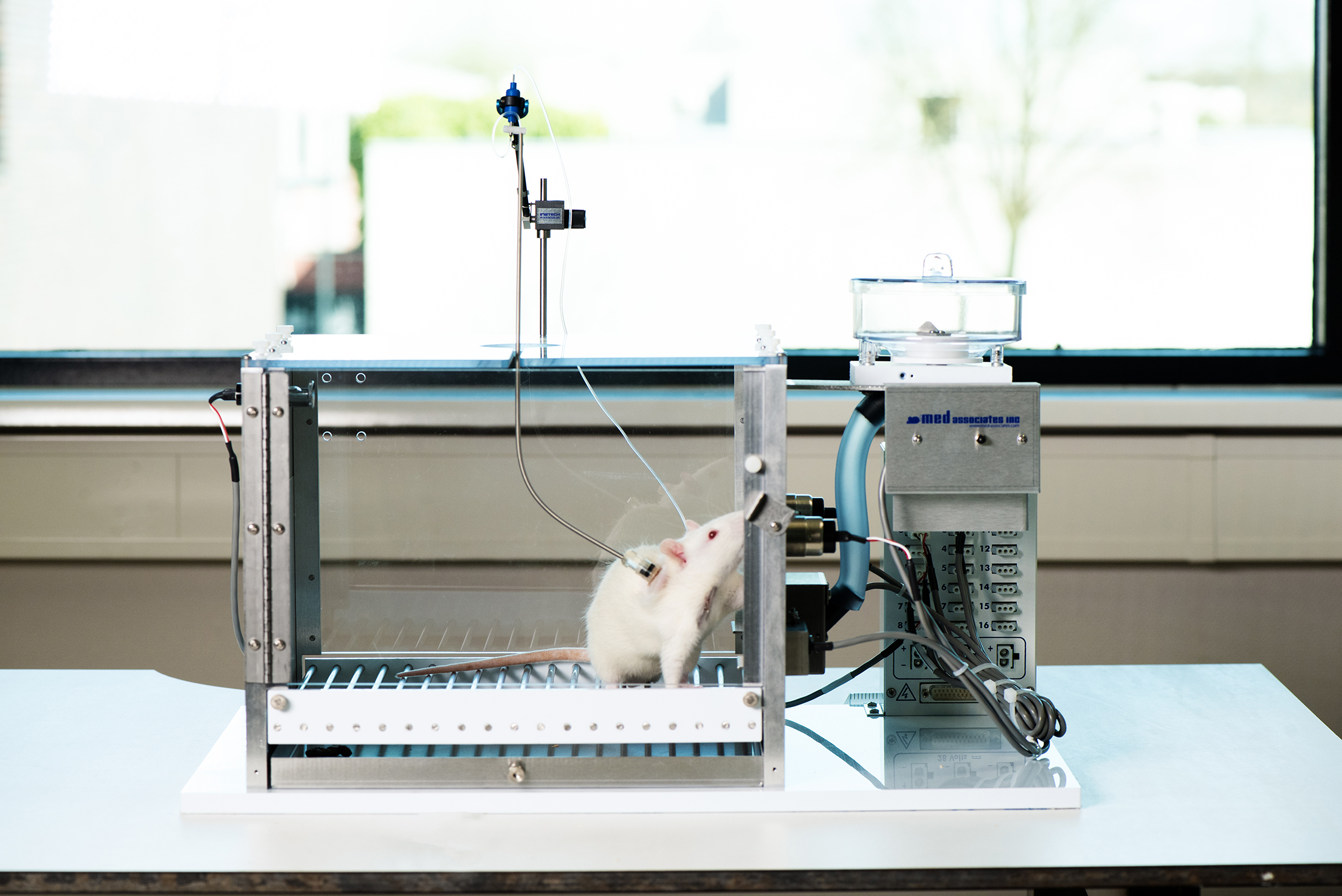 IV Self Administration Equipment for Rats