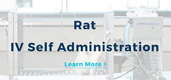 Rat IV Self Administration
