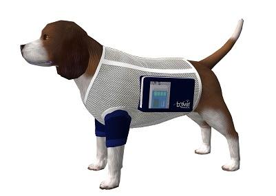 Ambulatory dog infusion